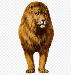 lion clipart east african lion leopard felidae [ 900 x 1040 Pixel ]