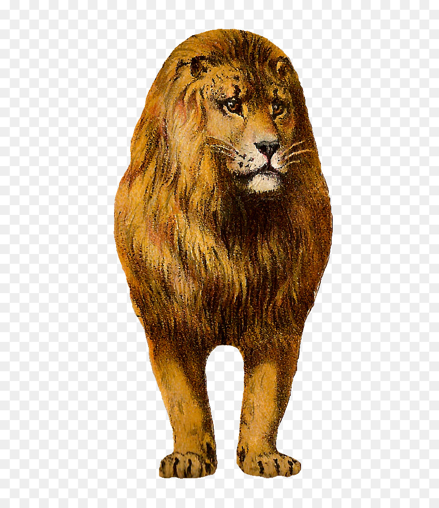 hight resolution of lion clipart east african lion leopard felidae