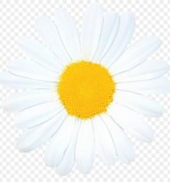 daisy clipart oxeye daisy daisy family chrysanthemum [ 900 x 900 Pixel ]
