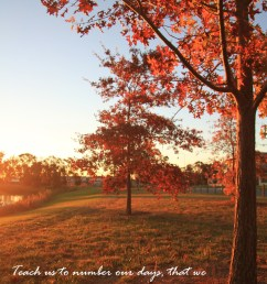 download fall background with bible verse clipart the holy bible the new king james version psalms [ 900 x 1350 Pixel ]