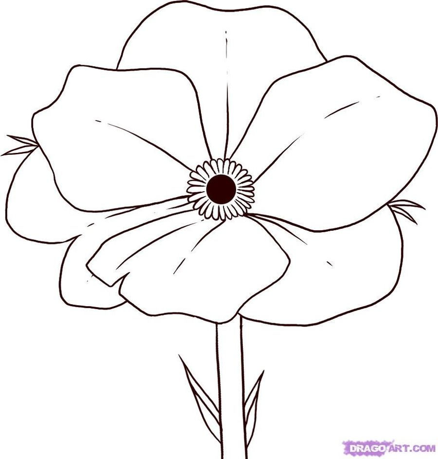 medium resolution of poppy flower coloring page clipart poppy coloring book drawing