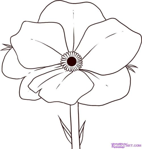 small resolution of poppy flower coloring page clipart poppy coloring book drawing