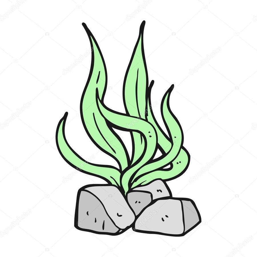 hight resolution of drawing royaltyfree cartoon seaweed