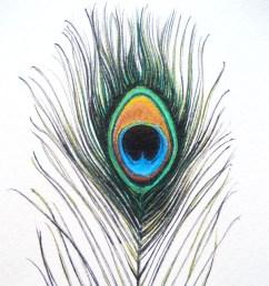 peacock  [ 900 x 900 Pixel ]