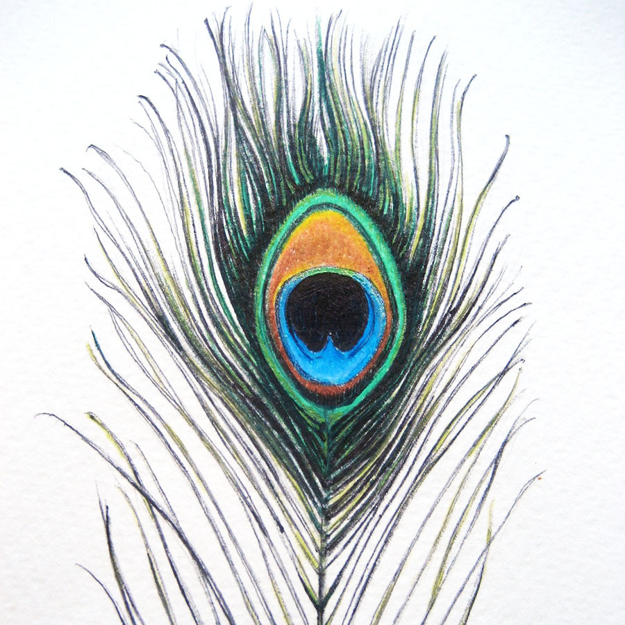 hight resolution of peacock