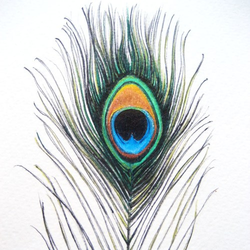 small resolution of peacock