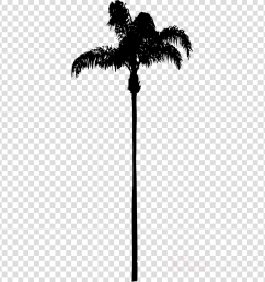 palm tree no background clipart palm trees california palm clip art [ 900 x 900 Pixel ]