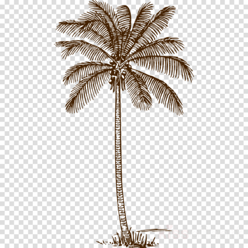 small resolution of palm tree line drawing clipart palm trees drawing clip art