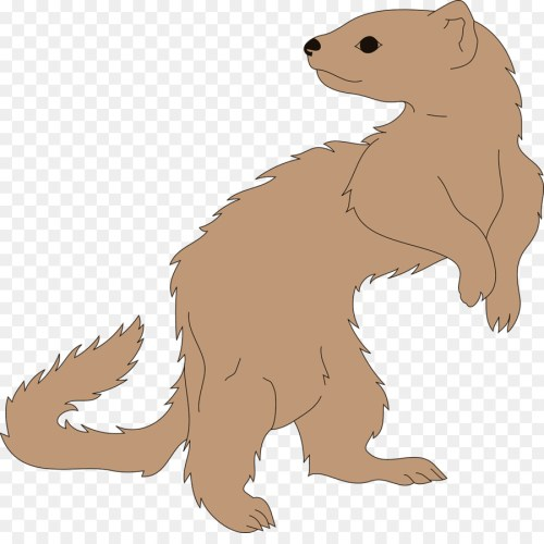 small resolution of clip art ferret clipart ferret stoat clip art