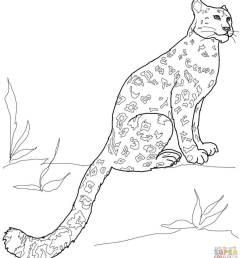download snow leopard coloring pages clipart snow leopard coloring book drawing color wildlife [ 900 x 1008 Pixel ]