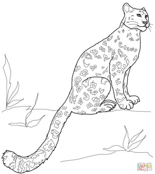 small resolution of download snow leopard coloring pages clipart snow leopard coloring book drawing color wildlife