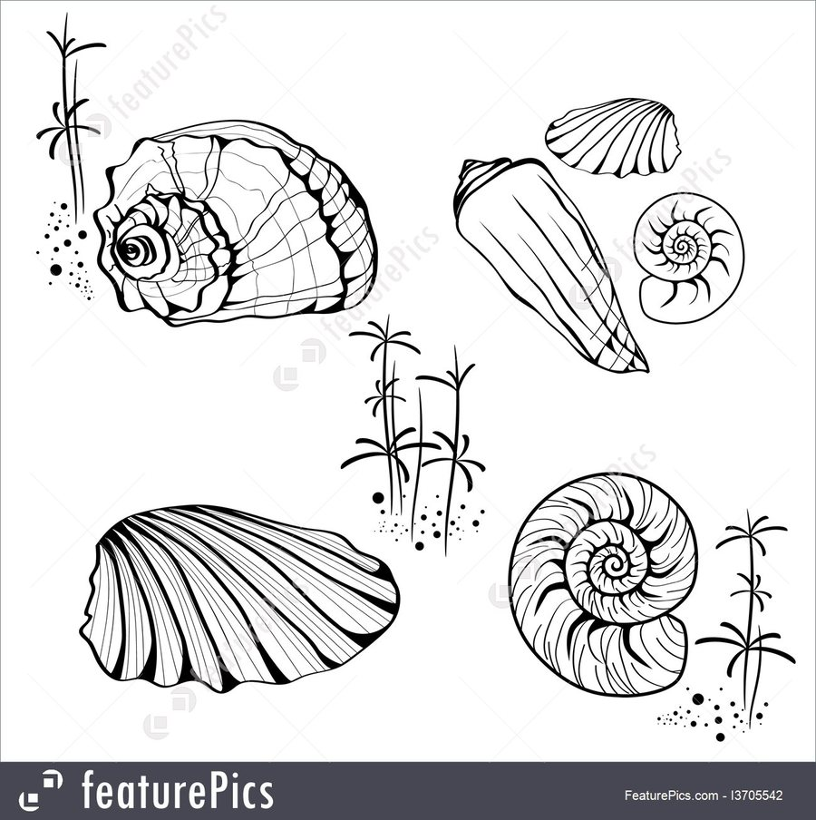 hight resolution of download snail clipart seashell snail