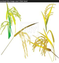 food grain clipart jasmine rice thai cuisine [ 900 x 900 Pixel ]