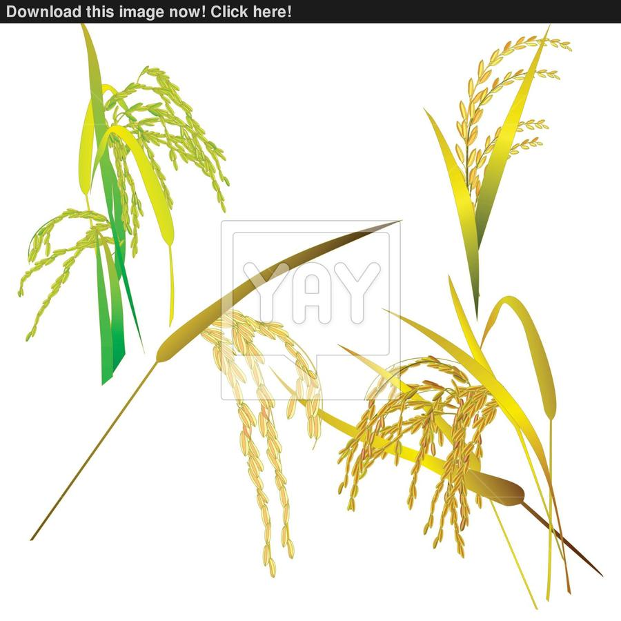 hight resolution of food grain clipart jasmine rice thai cuisine