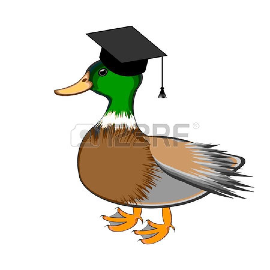 hight resolution of duck with chef hat clipart duck mallard