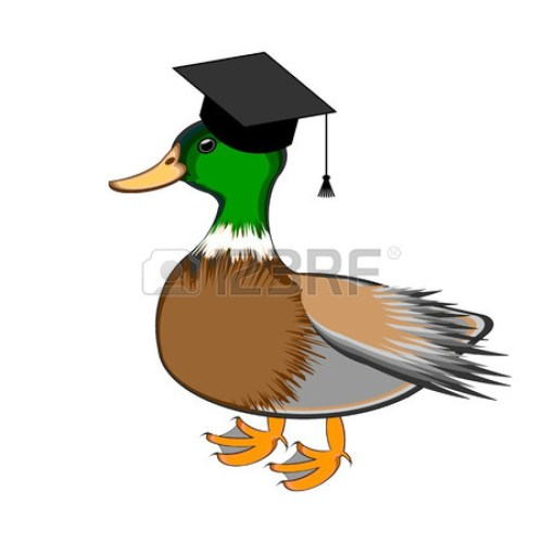small resolution of duck with chef hat clipart duck mallard