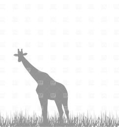 giraffe clipart giraffe savanna fauna [ 900 x 900 Pixel ]