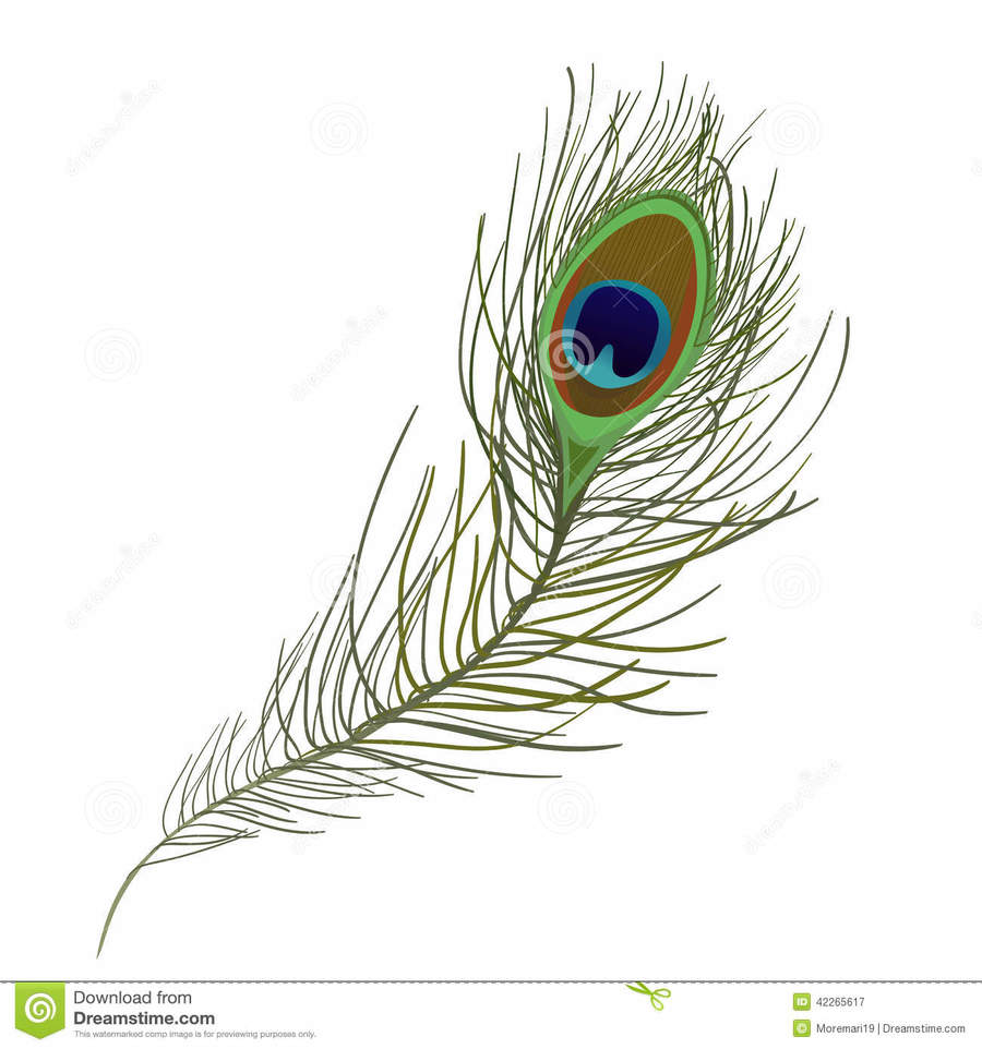 medium resolution of peacock feather single clipart feather clip art