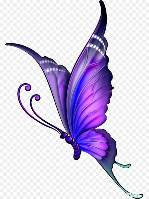 small resolution of butterfly drawing with color clipart butterfly drawing clip art
