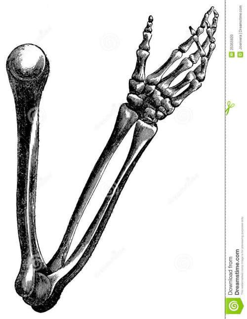 small resolution of skeleton arm drawing clipart arm human skeleton drawing
