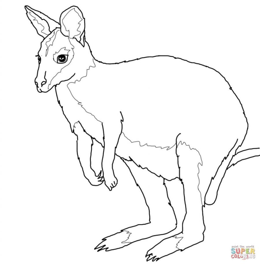 medium resolution of coloring book clipart kangaroo coloring book colouring pages