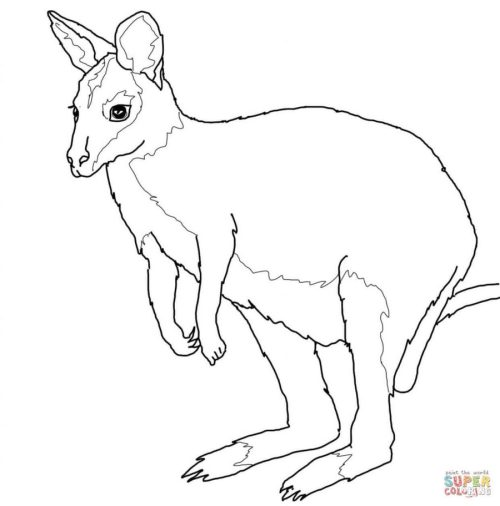small resolution of coloring book clipart kangaroo coloring book colouring pages