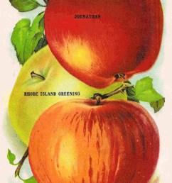 vintage apple fruit clipart apple vegetarian cuisine clip art [ 900 x 1356 Pixel ]