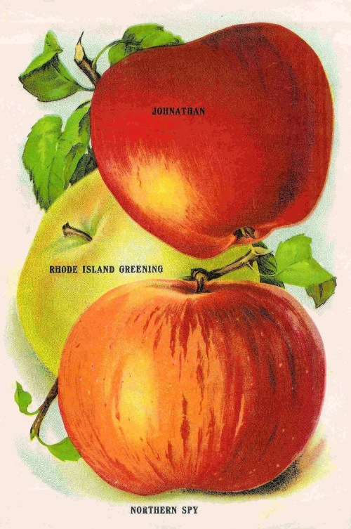 small resolution of vintage apple fruit clipart apple vegetarian cuisine clip art