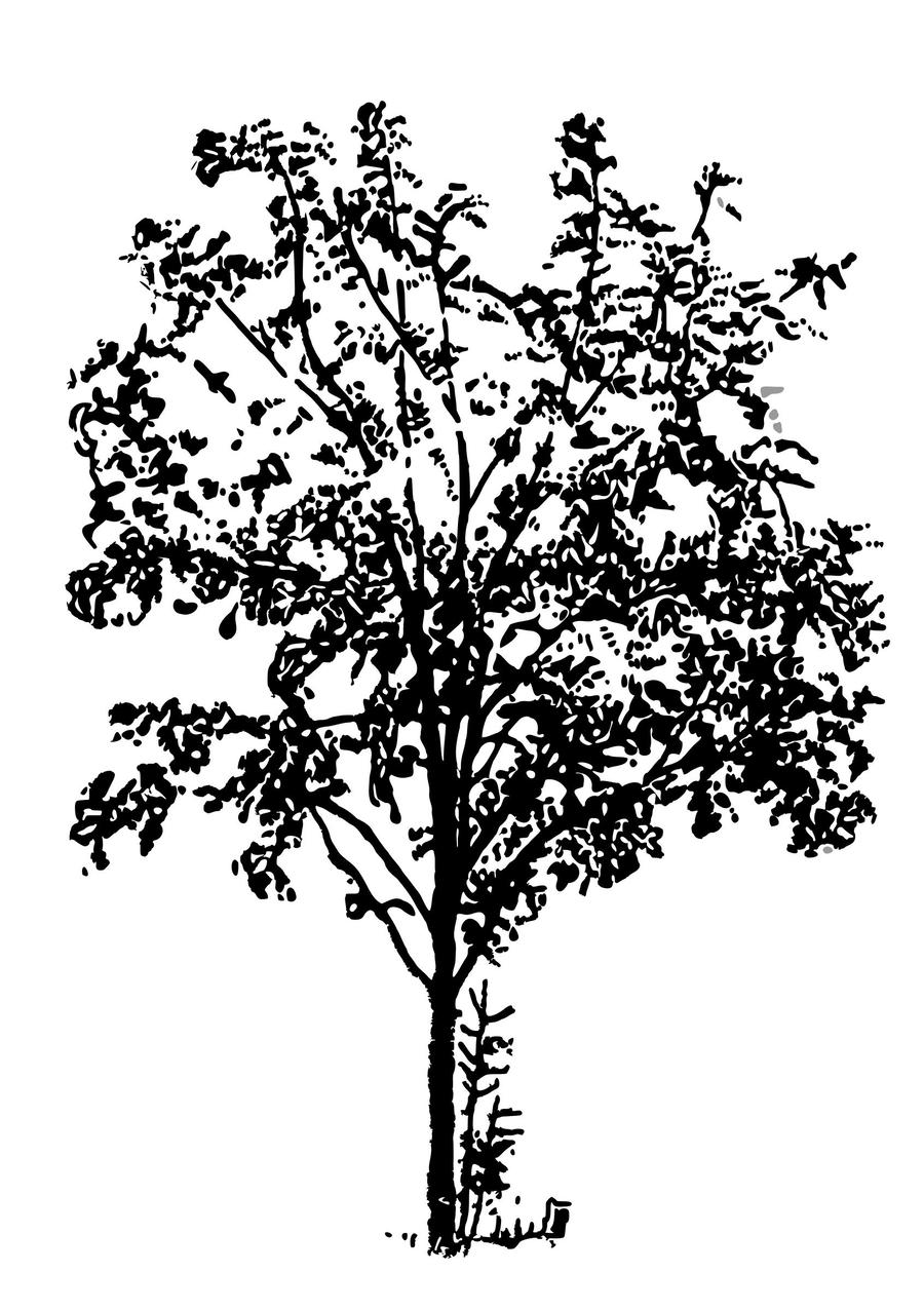 hight resolution of b w png clipart clip art