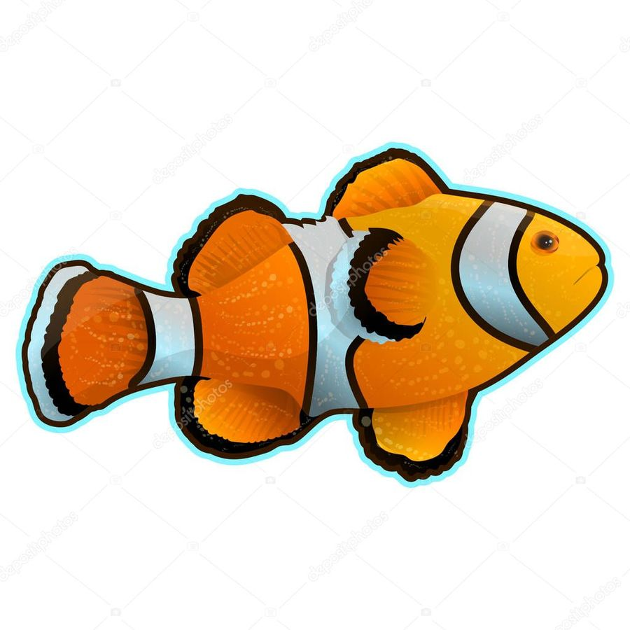 hight resolution of clownfish clipart clownfish clip art