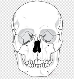 human skull diagram clipart human skeleton skull human body [ 900 x 900 Pixel ]