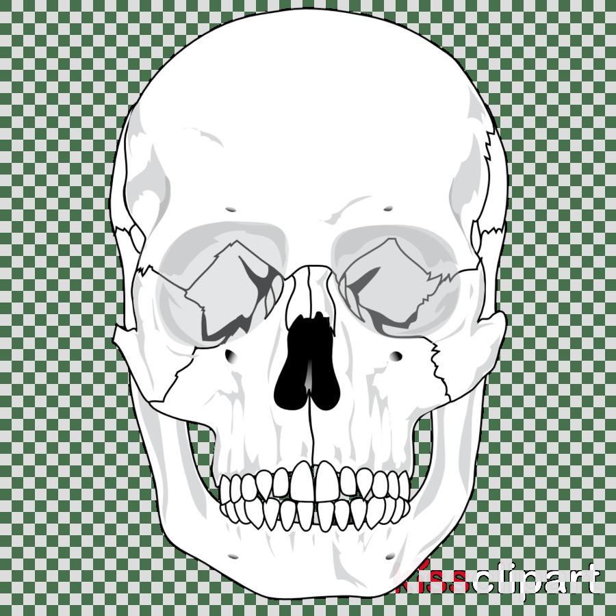 hight resolution of human skull diagram clipart human skeleton skull human body