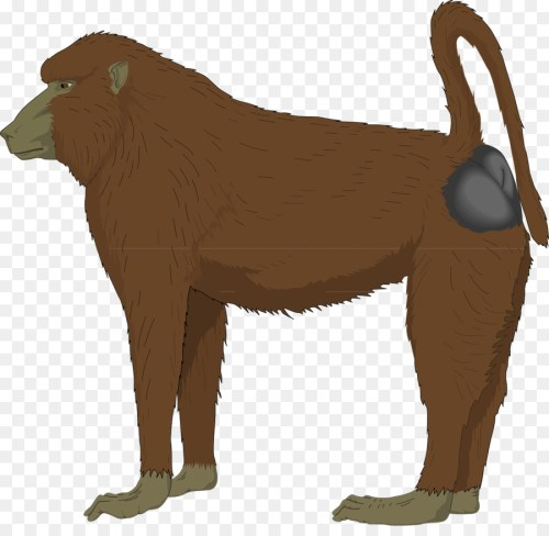 small resolution of baboon clipart mandrill ape clip art