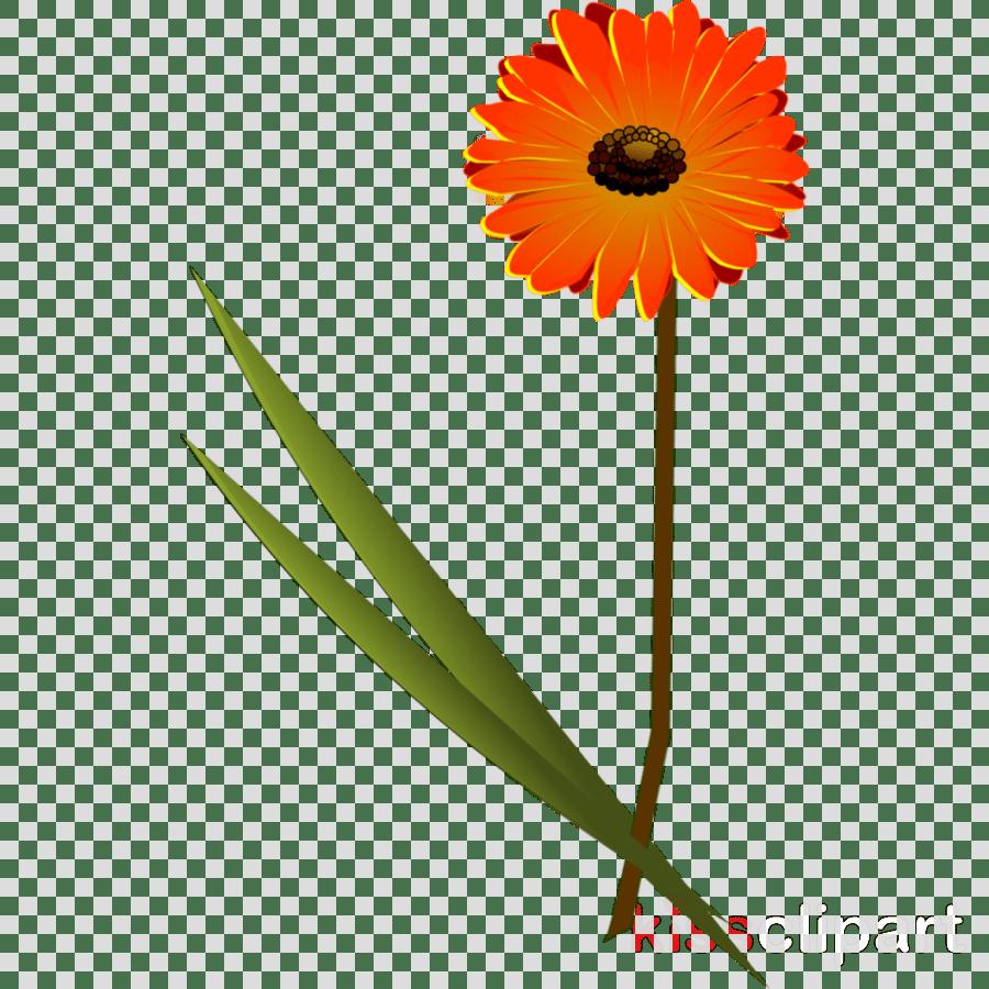 hight resolution of gerbera clipart daisy family clip art