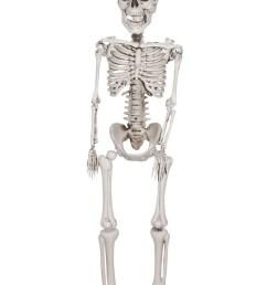download plastic skeleton clipart human skeleton skull skull [ 900 x 1286 Pixel ]