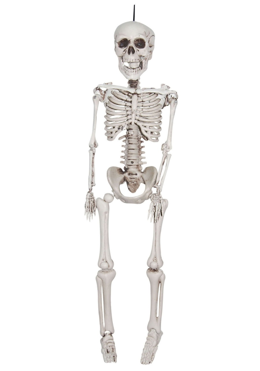 hight resolution of download plastic skeleton clipart human skeleton skull skull