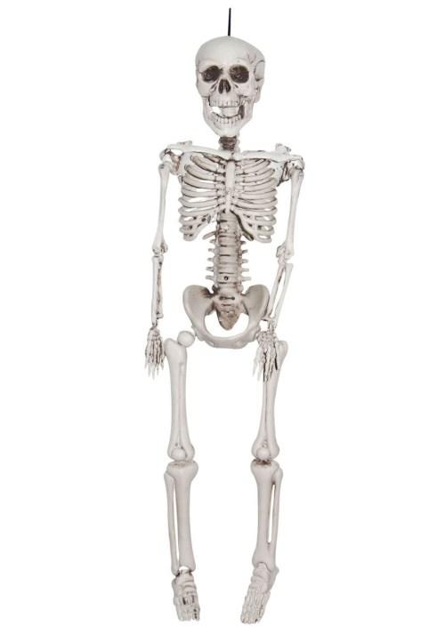 small resolution of download plastic skeleton clipart human skeleton skull skull