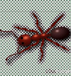 ant clipart ant clip art [ 900 x 900 Pixel ]
