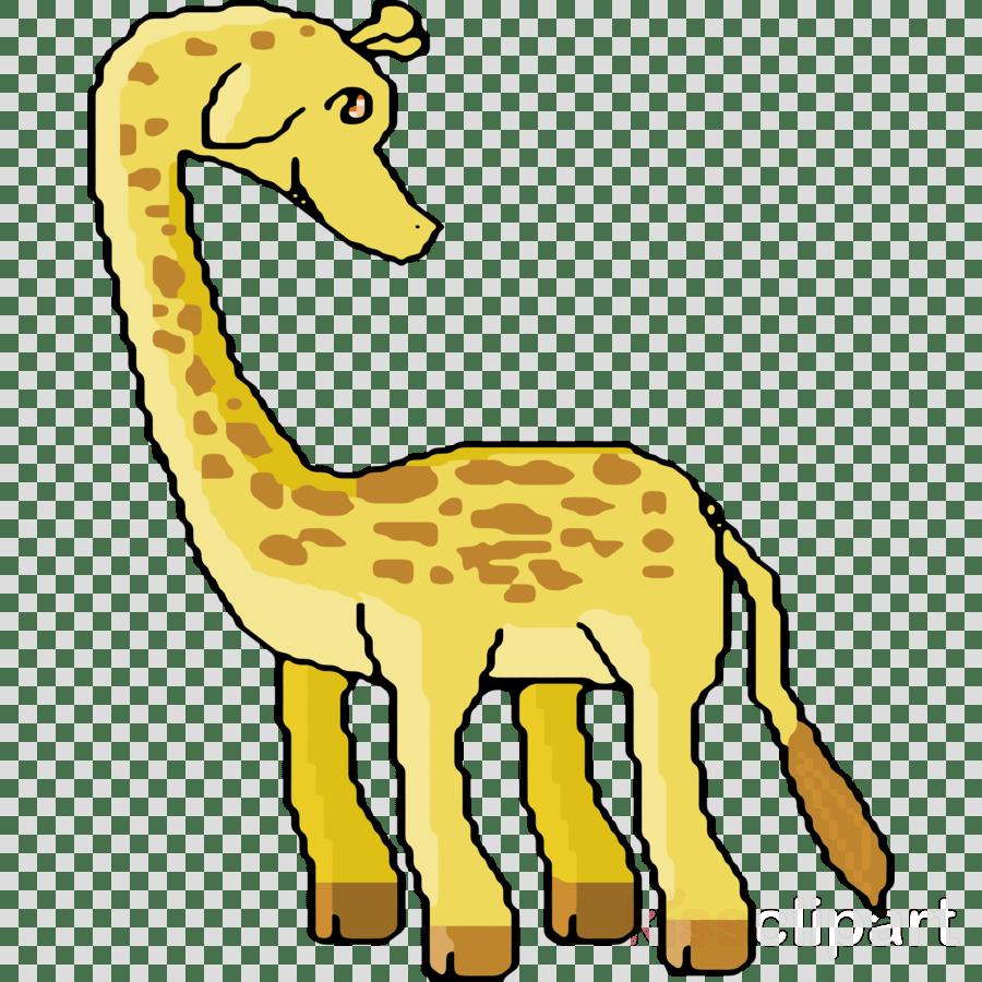 medium resolution of giraffe clipart okapi northern giraffe clip art