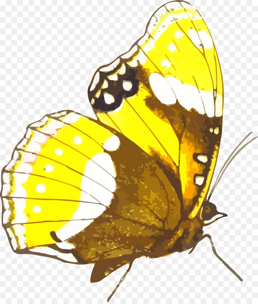 hight resolution of monarch butterfly clipart monarch butterfly pieridae