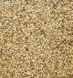 download grain clipart oat vegetarian cuisine emmer food [ 900 x 900 Pixel ]