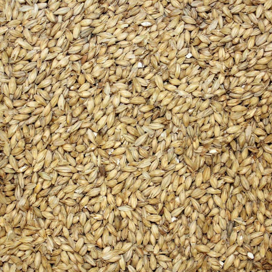 medium resolution of download grain clipart oat vegetarian cuisine emmer food