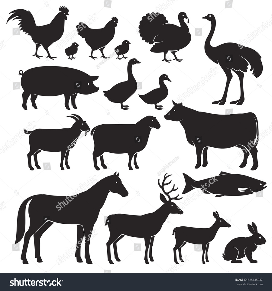 medium resolution of animal silhouette clipart