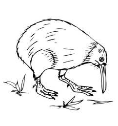 kiwi bird coloring page clipart bird coloring book new zealand [ 900 x 1200 Pixel ]