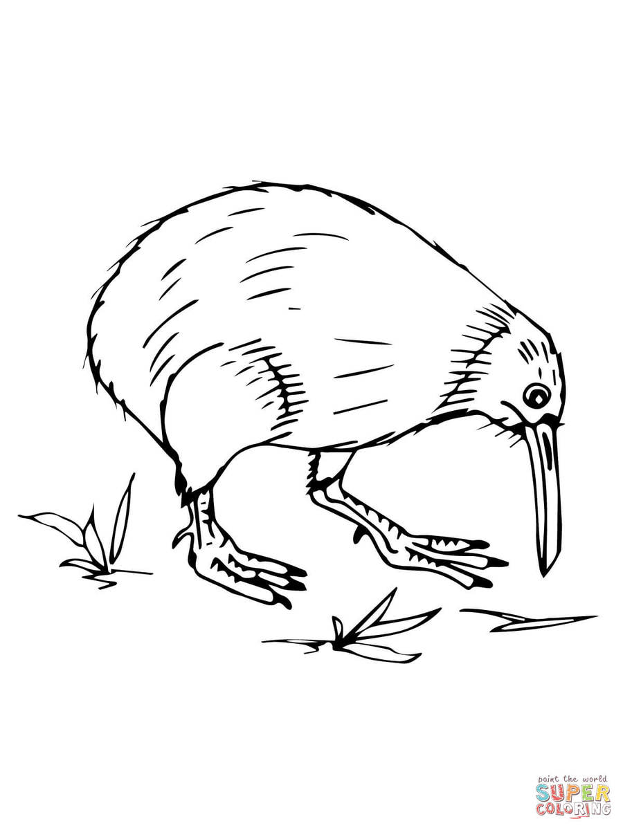 medium resolution of kiwi bird coloring page clipart bird coloring book new zealand