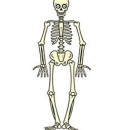 free download draw a skeleton clipart drawing human skeleton it comes with full background with resolution of 876 1024  [ 876 x 1024 Pixel ]