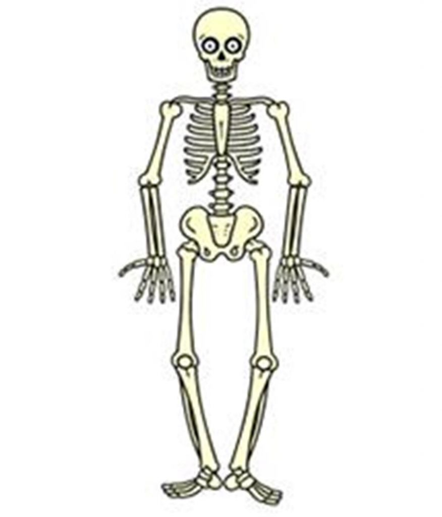medium resolution of free download draw a skeleton clipart drawing human skeleton it comes with full background with resolution of 876 1024