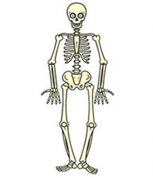 small resolution of free download draw a skeleton clipart drawing human skeleton it comes with full background with resolution of 876 1024