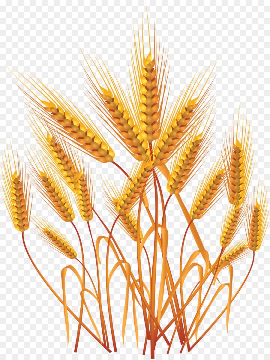 medium resolution of ears of wheat clipart ear threshing