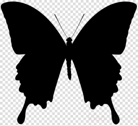 Butterfly Black And White clipart Butterfly Silhouette Illustration transparent clip art
